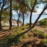 Pine trees near the pebble beach in Nova, Vela Luka