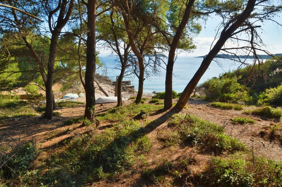 Pine trees near the pebble beach in Nova, Vela Luka